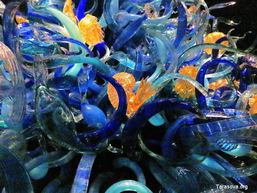 раковины, кораллы, спруты, волны - повторяются бесконечно