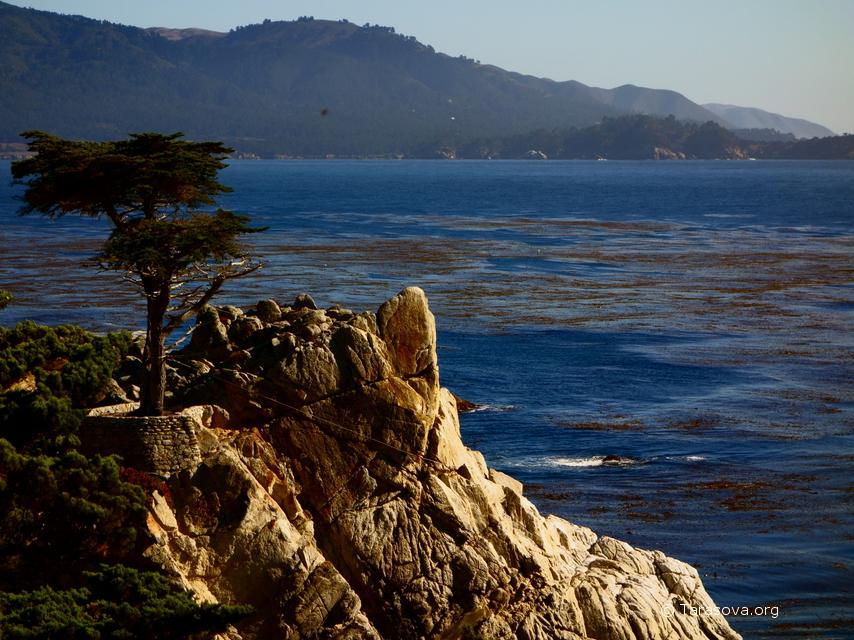 Одинокий Кипарис и Санта-Круз   (The Lone Cypress and Santa Cruz)